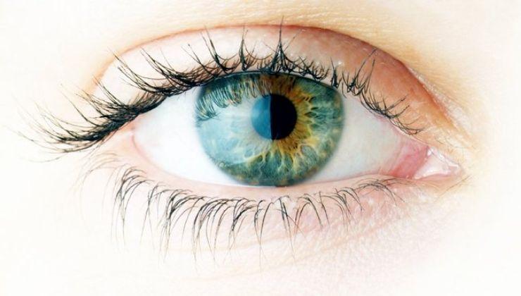 Human Eye Fundación IMO